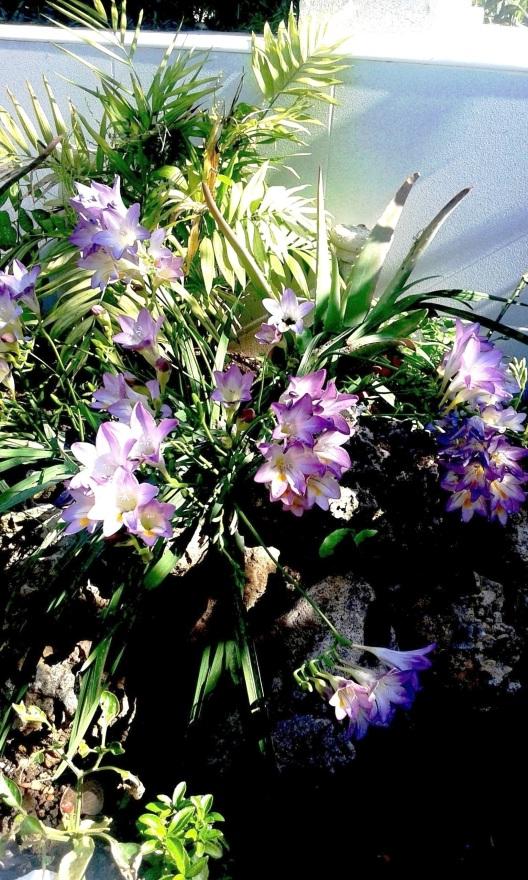 flores bis